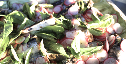 sardines-en-boite-radis-basilic-2