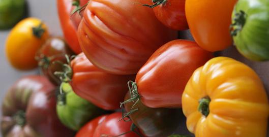 secret-salade-tomates-vigato